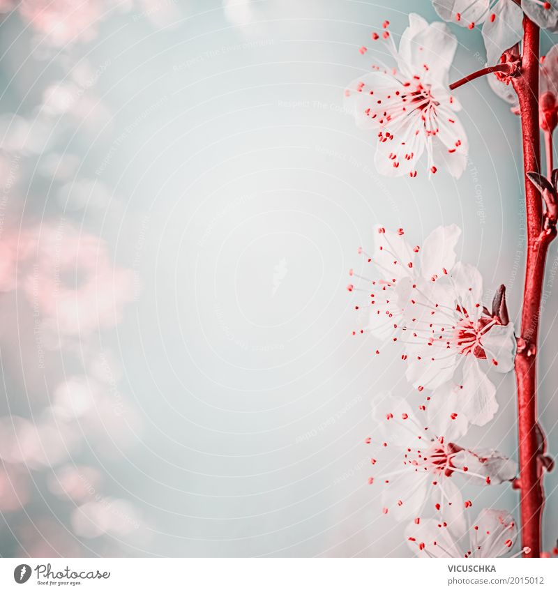 Beautiful cherry blossom, close-up view Style Design Summer Garden Valentine's Day Nature Plant Beautiful weather Flower Leaf Blossom Park Blossoming Pink April