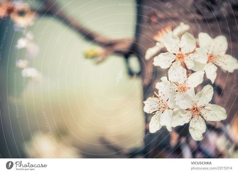 cherry blossoms Lifestyle Design Garden Nature Plant Spring Beautiful weather Tree Flower Leaf Blossom Park Blossoming Soft Pink Fragrance Cherry blossom