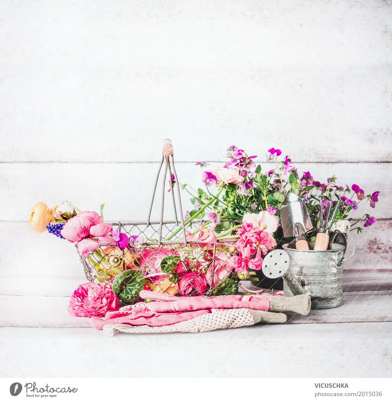 Garden accessories with flowers, garden tools and watering cans Style Design Summer Living or residing Decoration Nature Plant Spring Flower Leaf Blossom