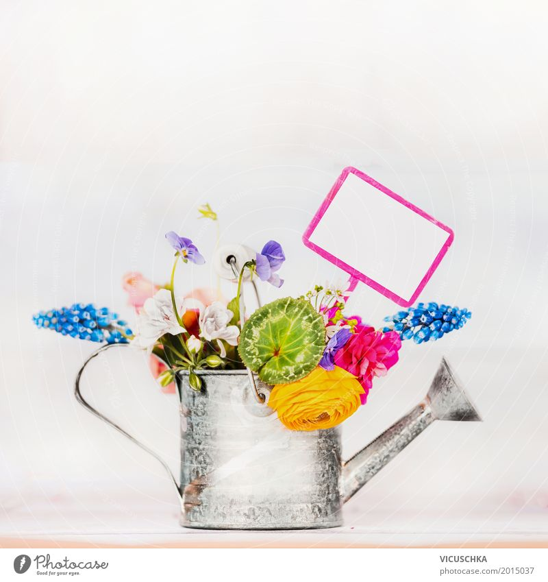 Watering can with garden flowers Style Design Summer Living or residing Garden Decoration Nature Plant Spring Flower Leaf Blossom Bouquet Signs and labeling
