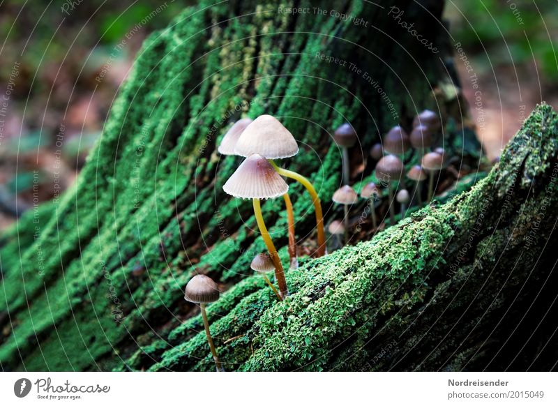 Mushrooms on dead wood Agriculture Forestry Nature Plant Autumn Climate Rain Tree Moss Park Virgin forest Wood Growth Green Life Tree stump Ecological Versatile
