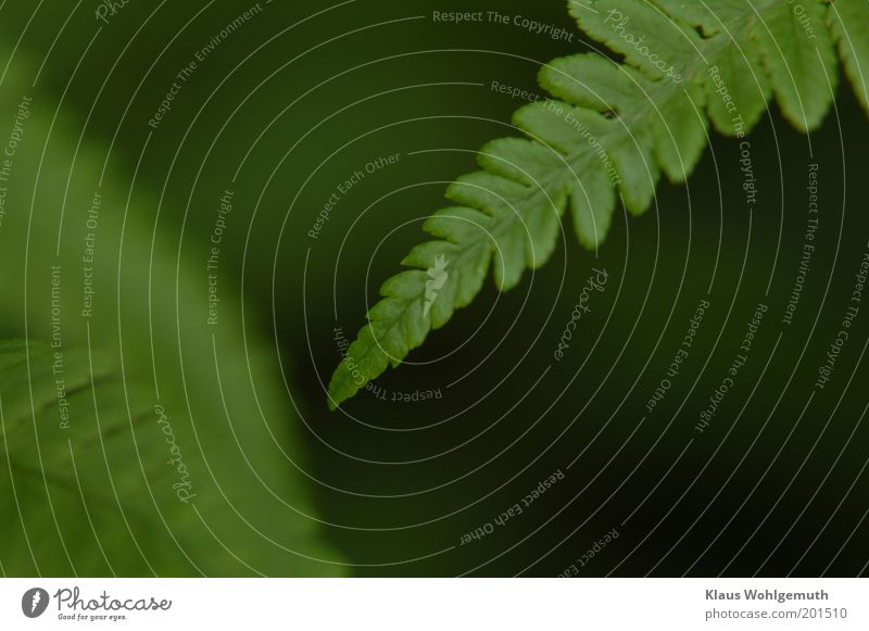 attempted rapprochement Environment Nature Plant Spring Fern Agricultural crop Wild plant Growth Green Colour photo Subdued colour Exterior shot Close-up Detail