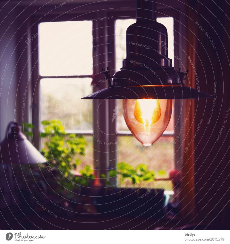 Calm Window Warmth Lifestyle Interior design Lamp Flat (apartment) Living or residing Illuminate Room Esthetic Authentic Uniqueness Friendliness Living room