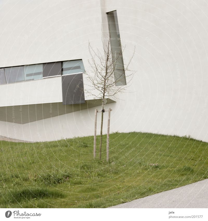 Tree Green House (Residential Structure) Meadow Wall (building) Window Grass Gray Wall (barrier) Building Architecture Facade Modern Manmade structures