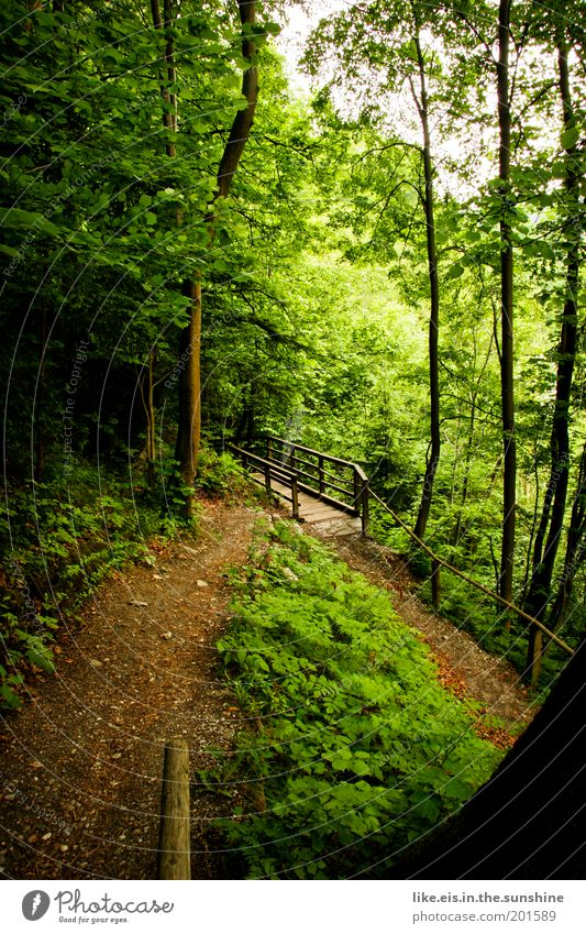 fairytale forest Harmonious Well-being Contentment Relaxation Calm Fragrance Environment Tree Grass Bushes Moss Ivy Fern Forest Hill Discover Innsbruck Bridge