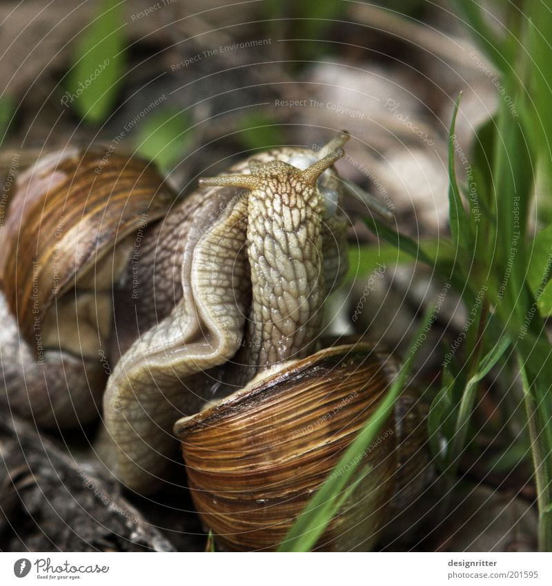 Meadow Garden Together Dance Natural Pair of animals Touch Kissing Lust Cuddly Snail Disgust Desire Embrace Sympathy Euphoria