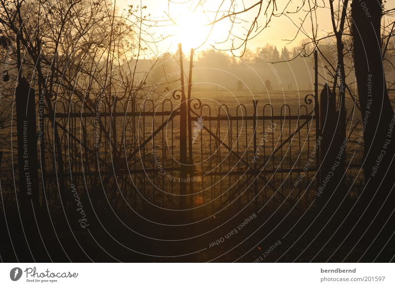 gate Nature Sun Sunrise Sunset Sunlight Tree Wild plant Field Gate Fence Observe Looking Beautiful Brown Yellow Moody Spring fever Pole Patch of light