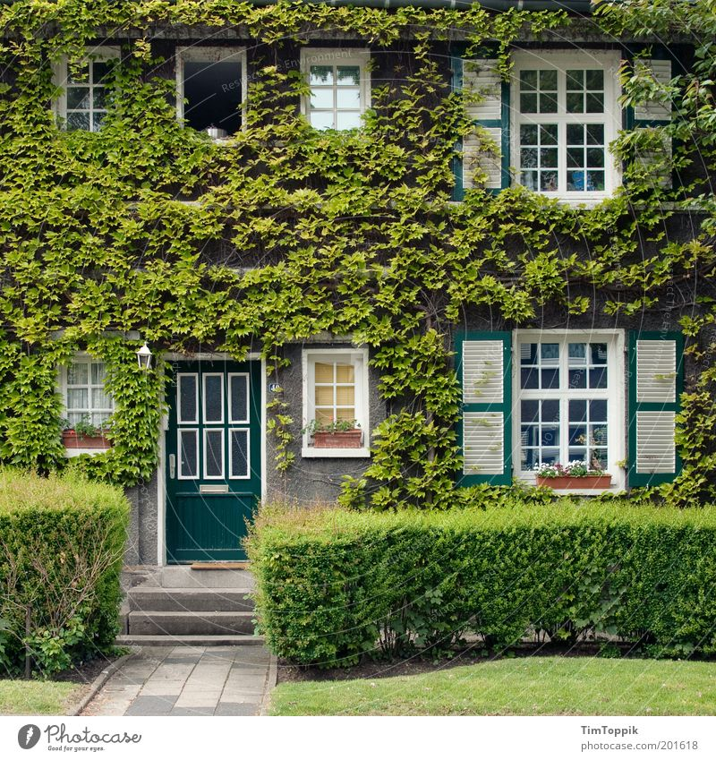 Green House (Residential Structure) Window Garden Architecture Facade Living or residing Entrance Building Fairy tale Home country Ivy Shutter Lovely Jinxed