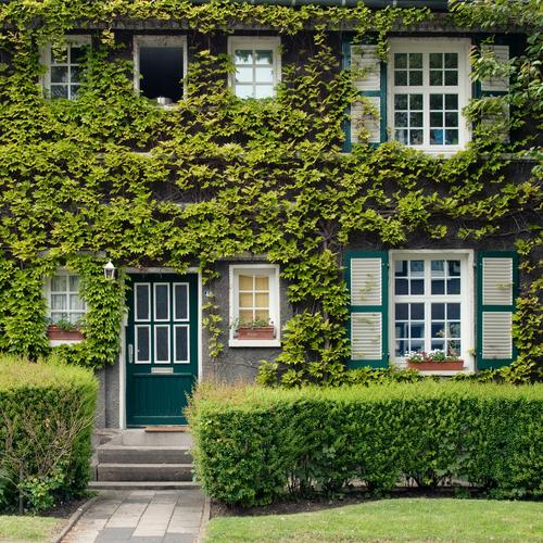 In Wonderland #3 House (Residential Structure) Green Ivy Facade Green facade Window Garden Living or residing Home country Jinxed Fairy tale Glazed facade