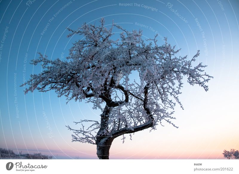 Sky Nature Blue Beautiful Tree Loneliness Winter Landscape Environment Cold Snow Emotions Air Ice Climate Esthetic