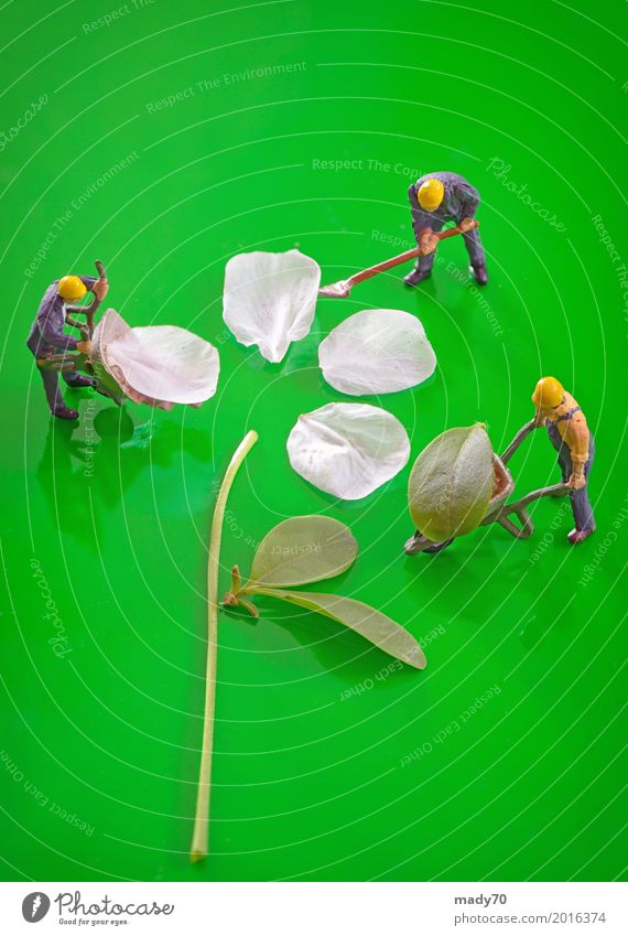 Miniature figures working to create spring cherry flower Green Flower Leaf Grass Garden Work and employment Earth Figure Gardening Stack