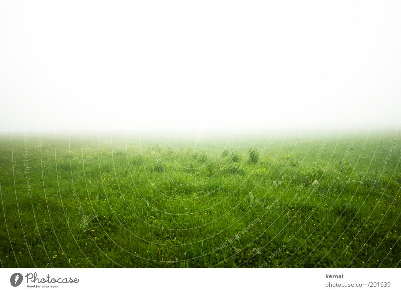 Nature White Green Plant Loneliness Cold Meadow Grass Spring Landscape Fear Fog Weather Environment Wet Horizon