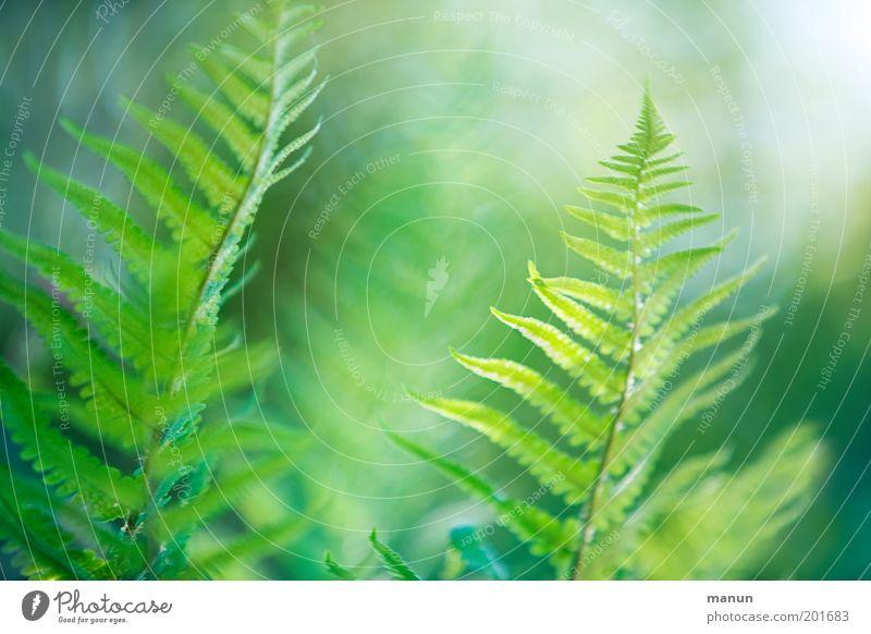 Nature Green Summer Calm Spring Garden Elegant Fresh Esthetic Fantastic Exotic Harmonious Ease Environmental protection Plant