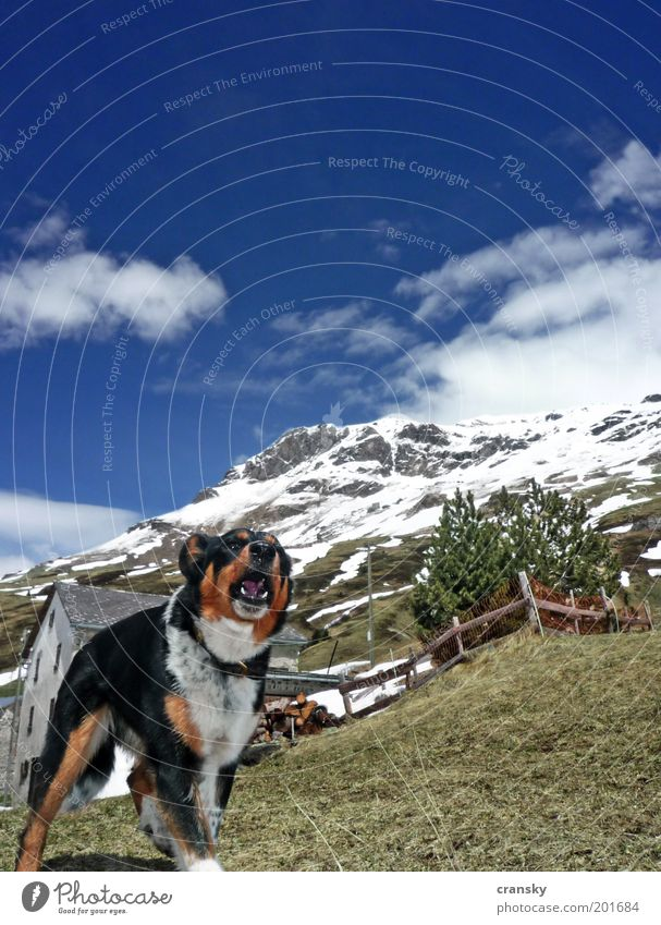 Dog Sky Vacation & Travel Summer Animal Mountain Snow Spring Rock Fear Tourism Hiking Beautiful weather Trip Protection Alps