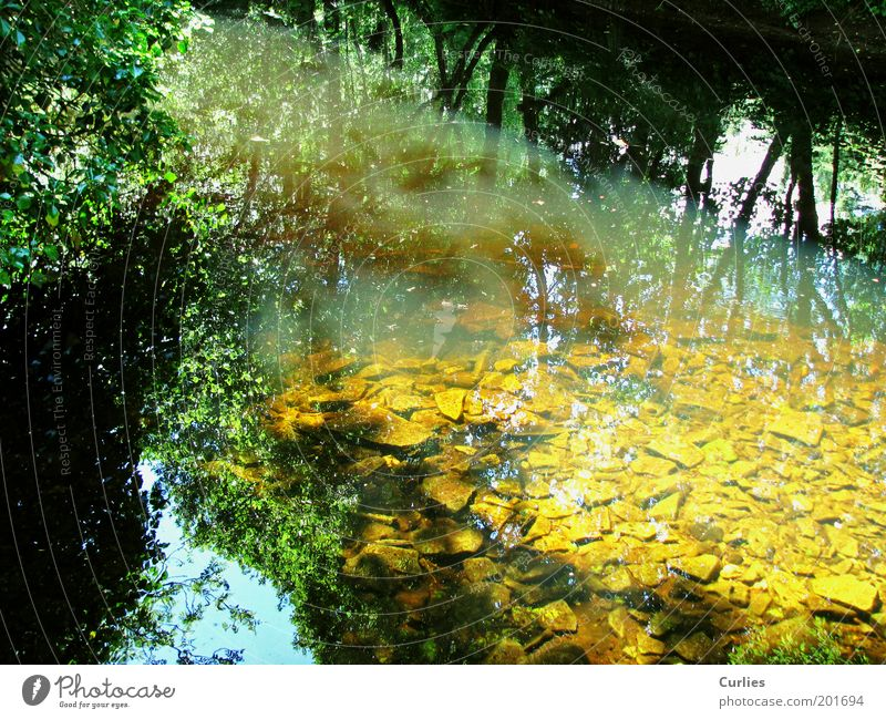 Nature Water Tree Green Summer Vacation & Travel Calm Leaf Yellow Autumn Spring Dream Stone Landscape Moody River