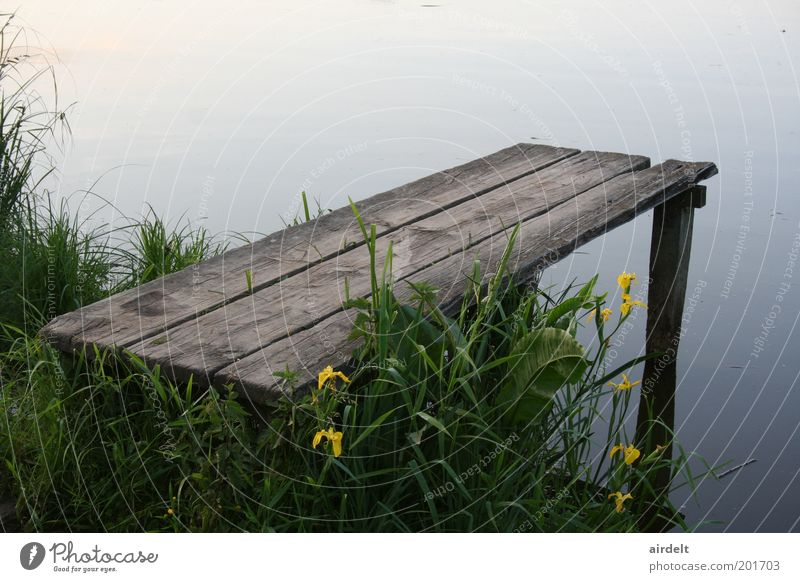 Nature Water Green Plant Summer Calm Grass Lake Landscape Idyll Footbridge Spring fever Light
