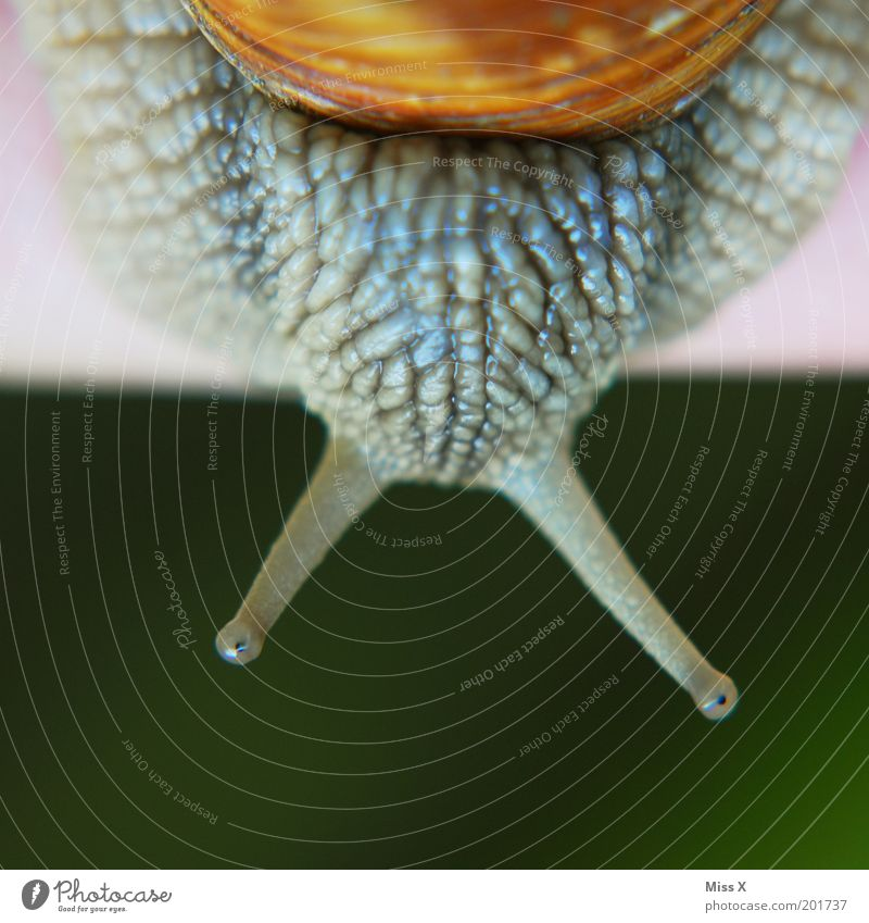 Animal Macro (Extreme close-up) Disgust Snail Feeler Crawl Slimy Mollusk Vineyard snail