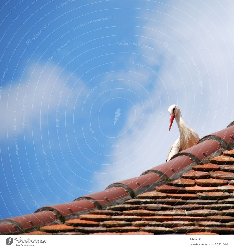 Sky Nature House (Residential Structure) Animal Emotions Happy Bird Wild animal Wait Beautiful weather Roof Anticipation Pregnant Fairy tale Nest Birth