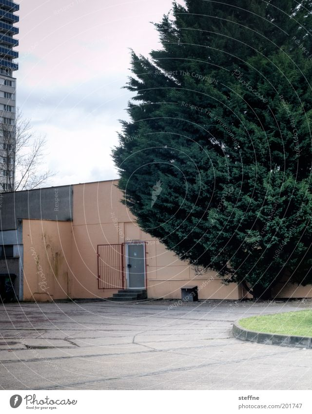 Tree Sadness Dream Door Open High-rise Gloomy Fir tree Grating Prefab construction Crisis Supermarket Fiasco Outskirts Without prospects Back door