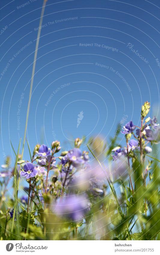 Nature Blue Green Beautiful Plant Summer Flower Calm Environment Landscape Meadow Grass Spring Blossom Dream Field