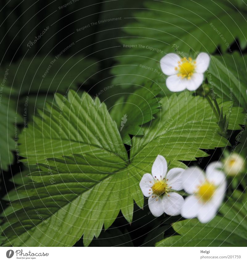 Nature Beautiful White Green Plant Leaf Yellow Blossom Spring Garden Environment Esthetic Growth Leisure and hobbies Natural Idyll