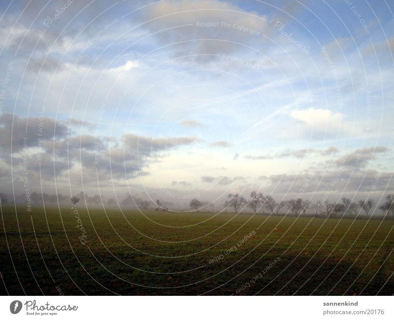 Sky Clouds Meadow Dew Majorca Sunrise Morning fog Almond tree