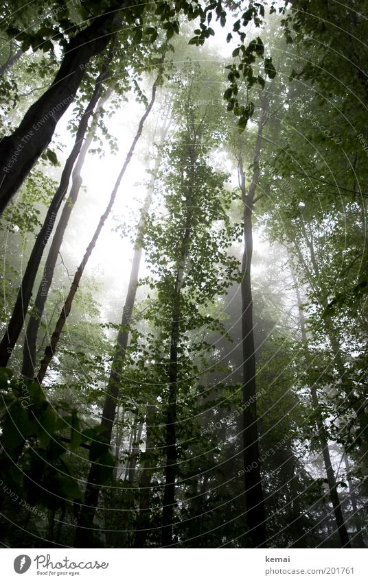 Swabian Rainforest Environment Nature Landscape Plant Sunlight Spring Climate Weather Bad weather Fog Tree Foliage plant Wild plant Branch Twig Branchage Growth