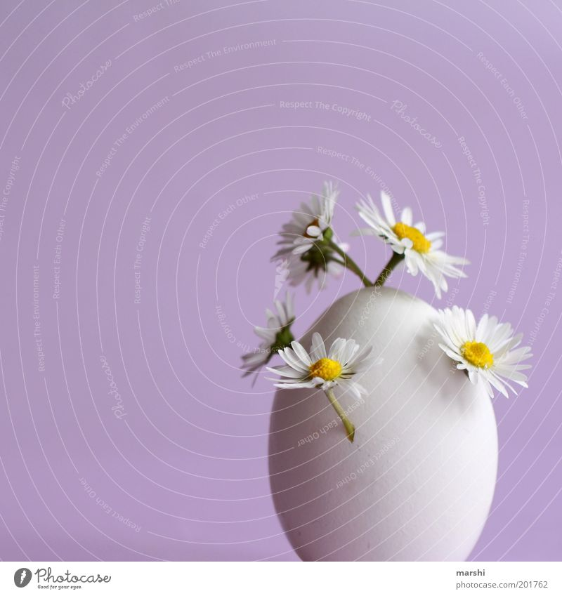 White Flower Plant Nutrition Small Food Growth Violet Decoration Egg Chocolate Daisy Strange Surprise Vase