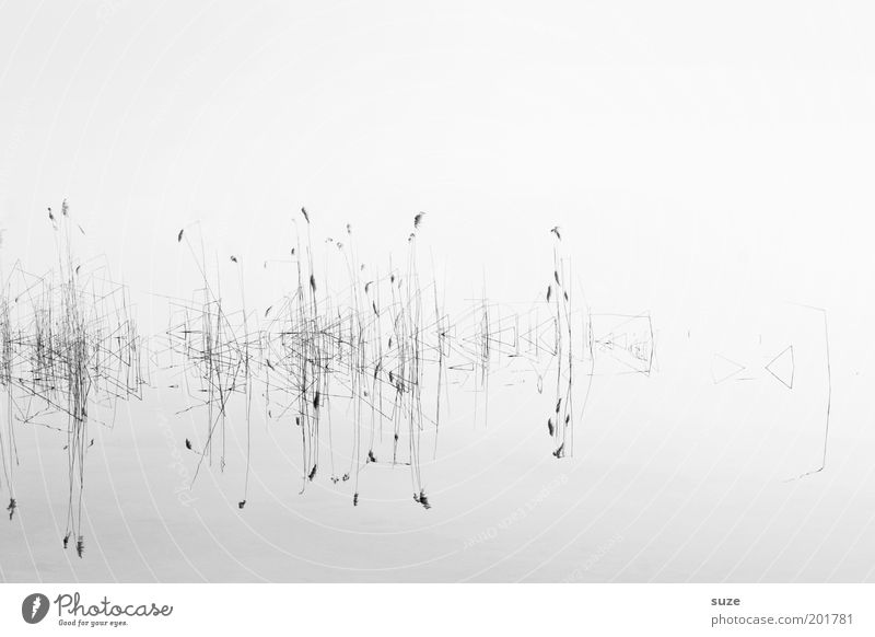 Nature Water Plant Calm Cold Grass Lake Landscape Abstract Environment Clean Clarity Natural Black & white photo Light Surface of water