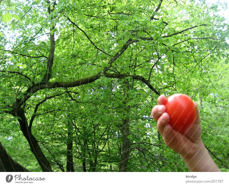 Human being Nature Hand Beautiful Tree Green Red Summer Colour Forest Fruit Exceptional Idyll Infancy Mature Harvest