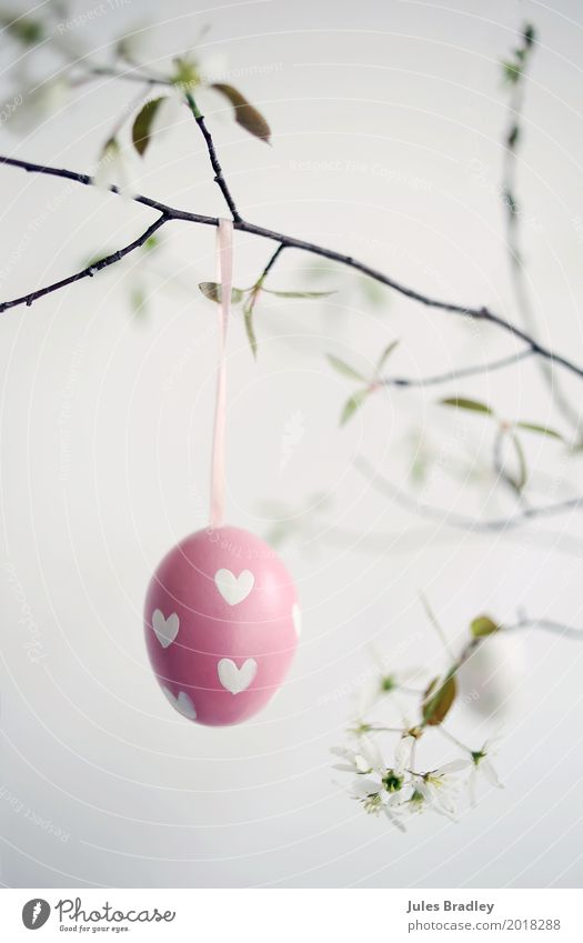 Happy Easter! Spring Twigs and branches Decoration Hang Happiness Pink White Joy Anticipation Belief Leisure and hobbies Idea Religion and faith Tradition Egg