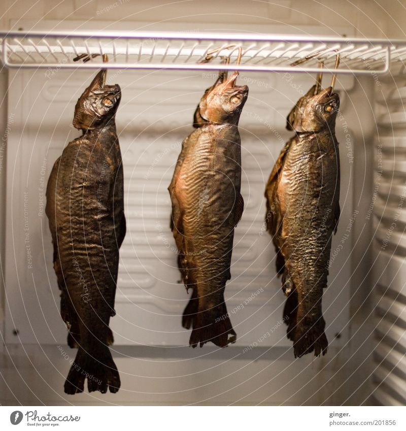 Smoked some fish today! Food Fish Nutrition Hang Smoked trout hung Metal grid Icebox Conserve Supply Trout Grotesque Exceptional Keep Cooling Deserted Multiple