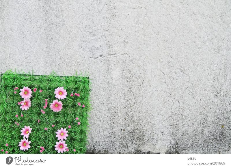 FLOWER CORNER Flower Blossom Wall (barrier) Wall (building) Facade Decoration Kitsch Odds and ends Concrete Plastic Gray Green Pink Corner Plastic world