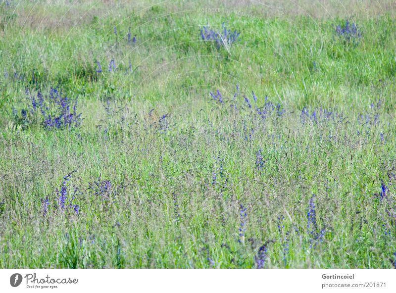 Nature Flower Green Plant Summer Meadow Blossom Grass Spring Landscape Environment Violet Beautiful weather Flower meadow Grassland Nature reserve