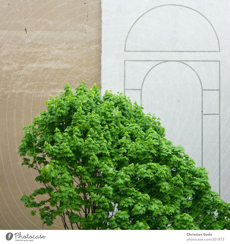 City Green Tree Leaf Wall (building) Architecture Building Wall (barrier) Gray Stone Brown Line Facade Park Vantage point Places