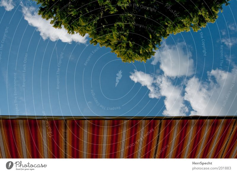 deckchair perspective Sun blind Sky Clouds Spring Summer Tree Blue Multicoloured Green White Summery Garden Leisure and hobbies Striped Colour photo