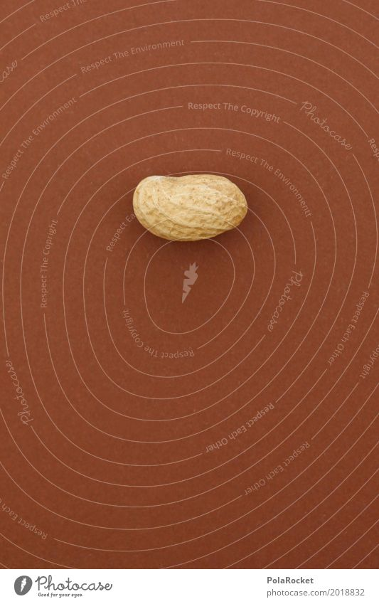 #A# Hard nut I Art Work of art Esthetic Nut Nutshell Nut brown Peanut Closed Headstrong Brown 1 Healthy Eating Colour photo Subdued colour Interior shot