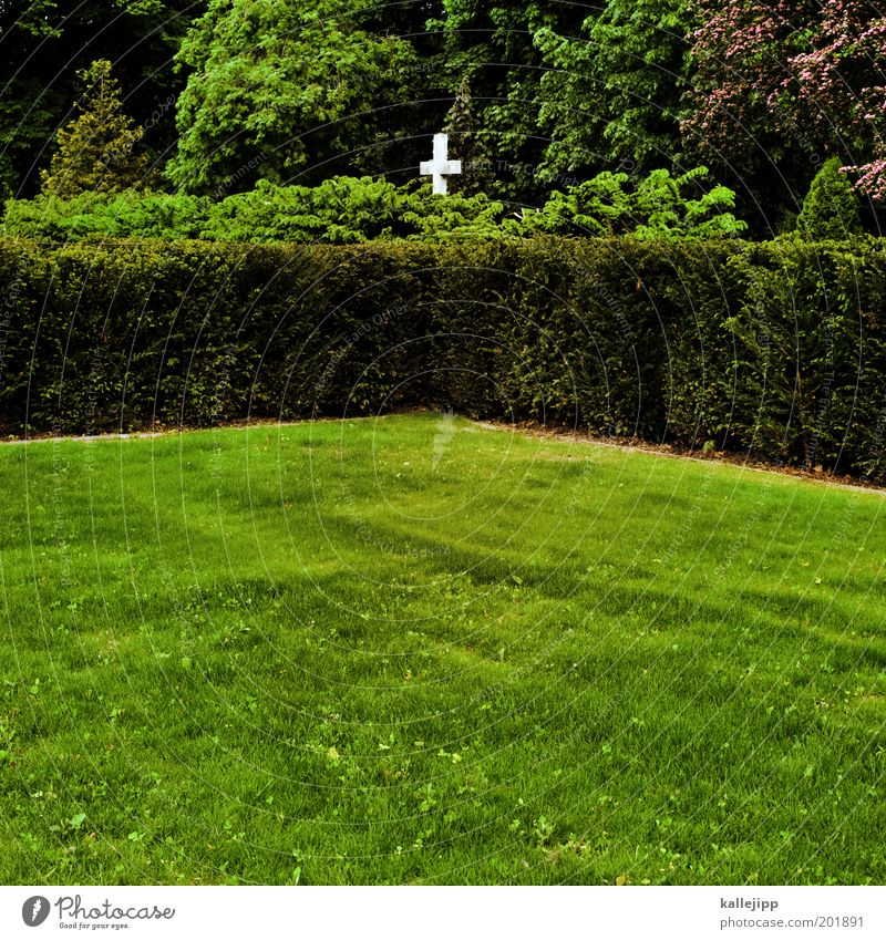 Garden of Eden Environment Nature Spring Plant Tree Bushes Foliage plant Park Meadow Forest Sign Crucifix Sustainability Green Compassion Goodness Humanity