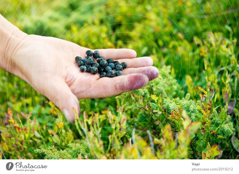 Hand full of wild berries Woman Nature Plant Blue Summer Colour Green Healthy Eating Hand Leaf Forest Black Adults Eating Yellow Meadow