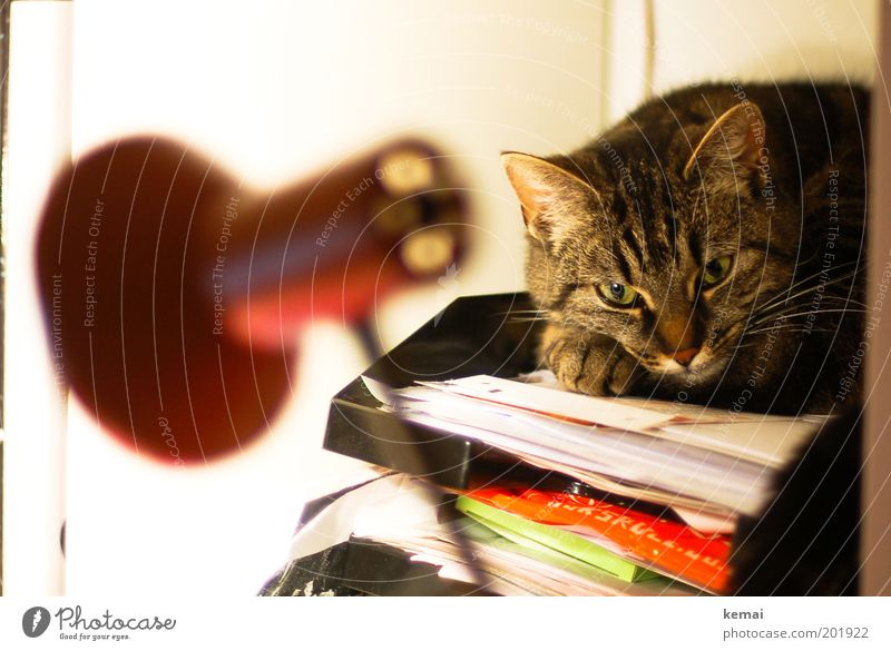 Eyes Animal Lamp Relaxation Cat Contentment Paper Animal face Lie Pelt Desk Paw Pet Striped Rack Multicoloured