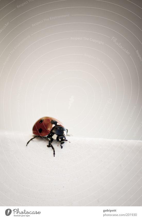 White Red Joy Animal Black Wall (building) Happy Happiness Cute Point Joie de vivre (Vitality) Beetle Crawl Ladybird Feeler Optimism