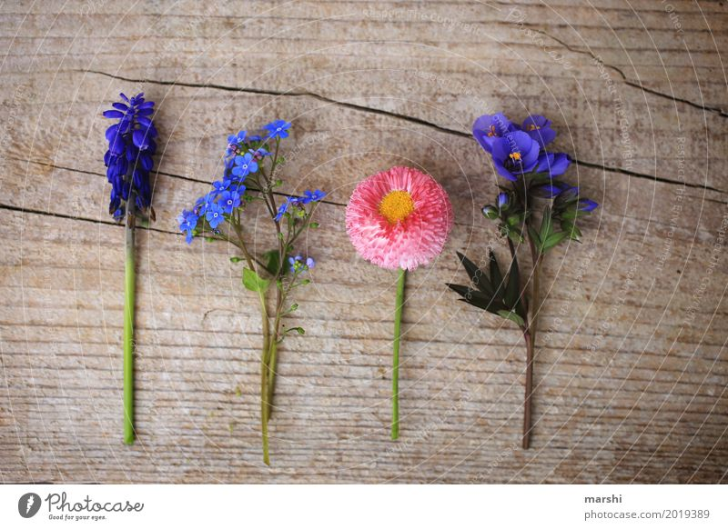 Friends in spring Nature Plant Spring Flower Leaf Blossom Foliage plant Garden Meadow Moody Wood Spring flower Mother's Day Forget-me-not Daisy Hyacinthus 4