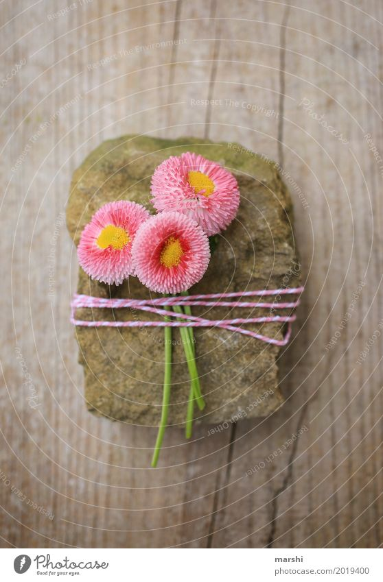 Nature Plant Flower Spring Love Emotions Garden Stone Moody Together Pink Friendship Decoration Birthday Gift Symbols and metaphors