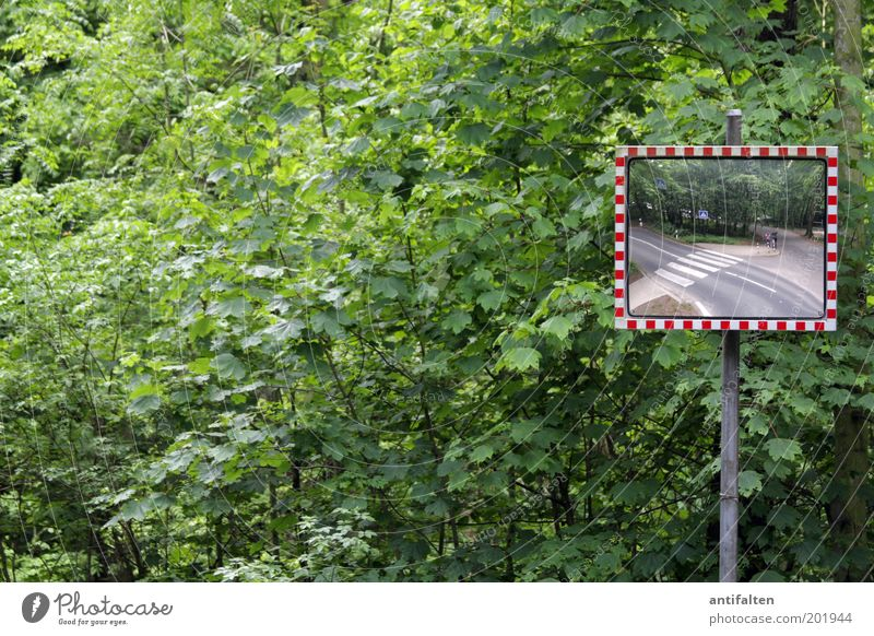 We in the forest in the forest Nature Spring Summer Plant Tree Bushes Leaf Park Forest Transport Street Crossroads Road junction Road sign Zebra crossing Mirror