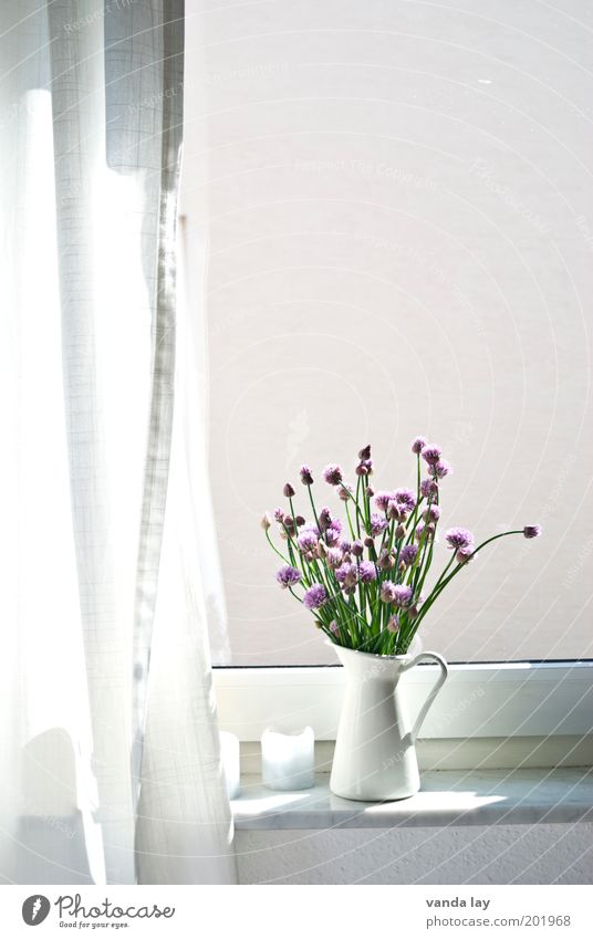 The other day at the window Lifestyle Style Flat (apartment) Decoration Spring Summer Plant Beautiful Chives Herbs and spices Water jug Vase Curtain Drape