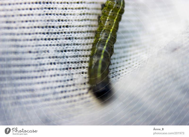 It creeps and flies Animal Cloth 1 Crawl Cute Speed Yellow Green White Voracious Caterpillar Rag Insect Colour photo Exterior shot Structures and shapes
