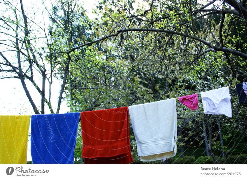 quickly freshened up! Garden Nature Air Beautiful weather Tree Cleaning Fresh Contentment Cleanliness Purity Esthetic Fragrance Environment Colour photo
