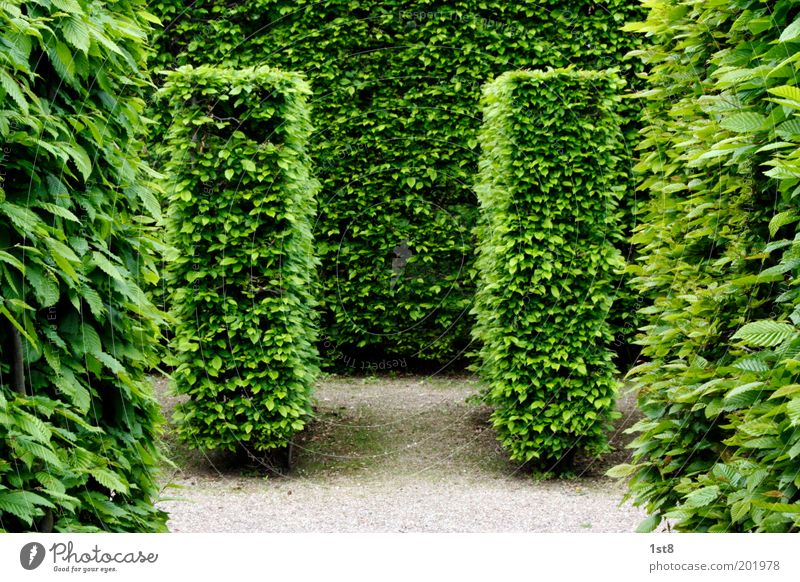 Nature Beautiful Plant Leaf Environment Meadow Spring Garden Park Esthetic Planning Clean Beautiful weather Inspiration Maze Hedge