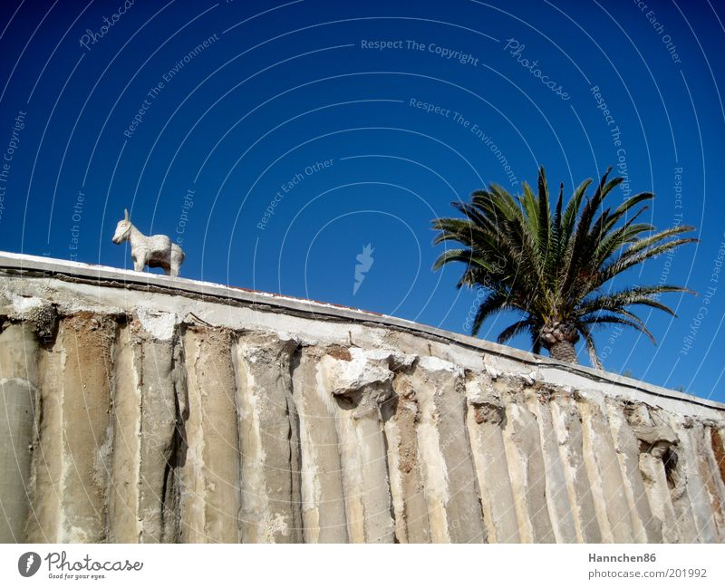 Beautiful Sky White Green Blue Calm Animal Happy Gray Dream Stone Wall (barrier) Lanes & trails Sand Line Contentment