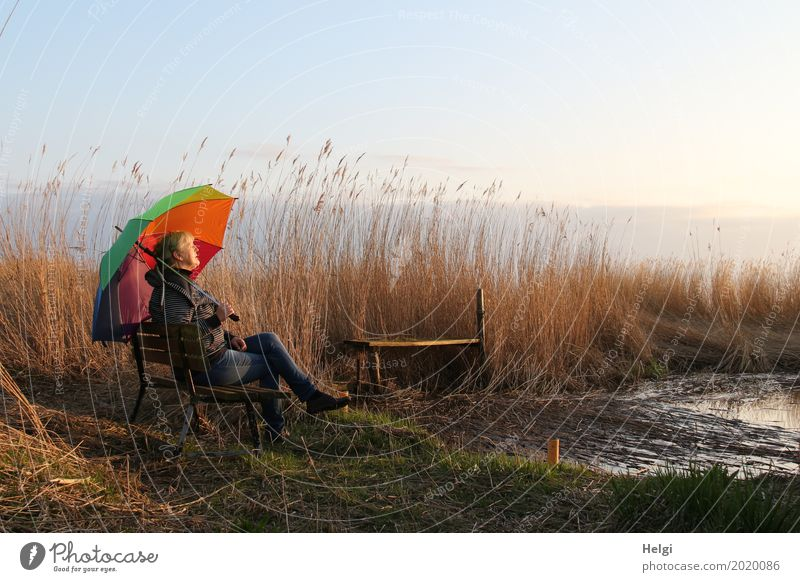 Woman enjoying the evening sun with a colourful umbrella on a bench in the reeds by the lake Human being Feminine Adults Female senior Senior citizen 1